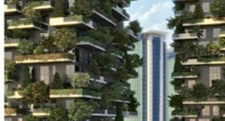 Как выглядит многоэтажный лес
