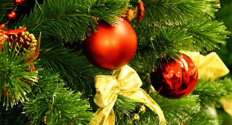 В магазинах уже продают елки по 250 гривен
