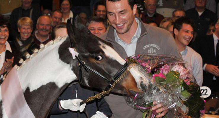Кличко на коне: ТОП-5 самых дорогих лошадей