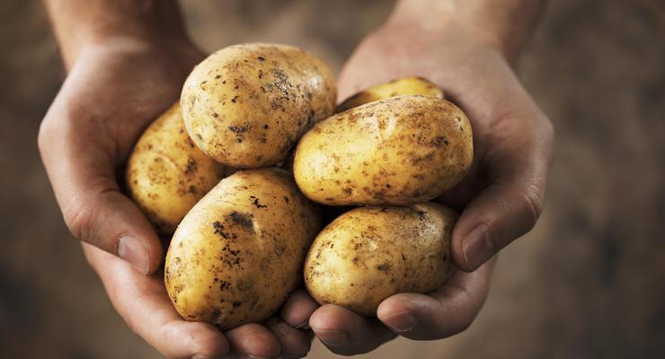 Капуста подорожает в 5 раз, а картошка на 35%