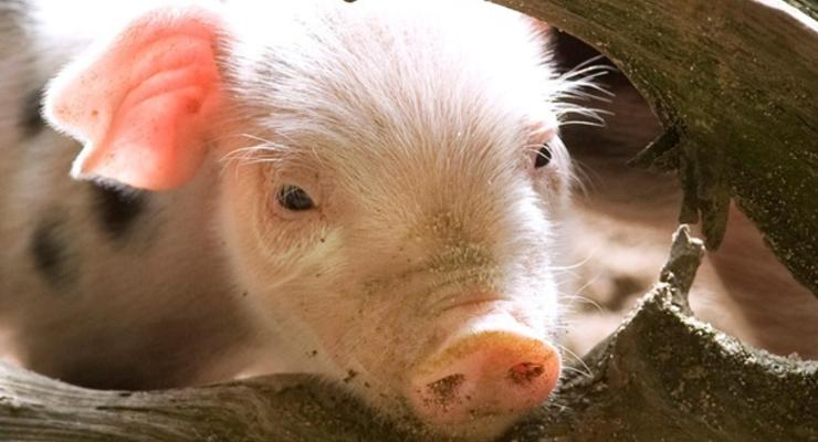 Украина в 2014 году нарастила производство всей продукции животноводства - Госстат