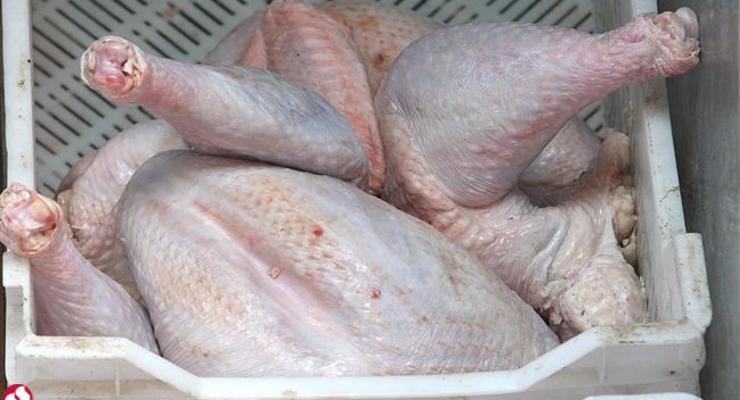 Украина нарастила экспорт курятины в ЕС в три раза - Павленко