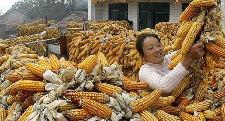 Спрос на украинскую кукурузу в Китае падает - глава ГПЗКУ
