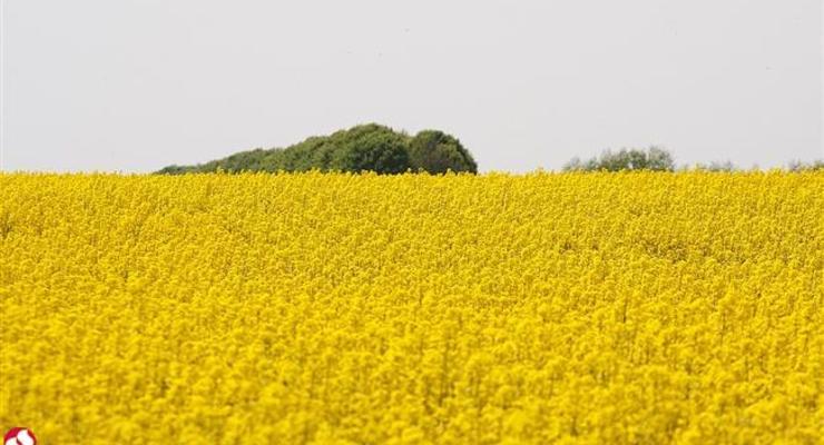 ЕБРР инвестирует до конца года в агросектор Украины $330 млн