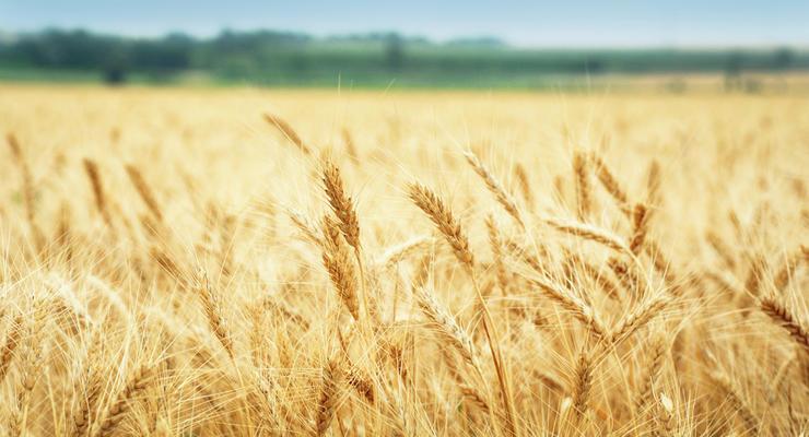 Украина увеличила экспорт зерна и муки