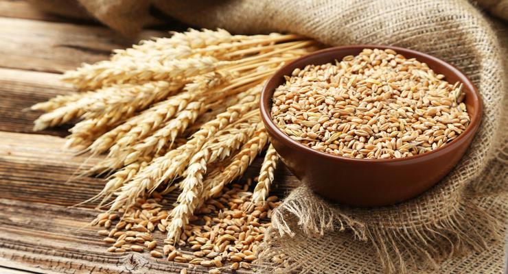 Украина на 100% выбрала квоты на экспорт пшеницы и кукурузы в ЕС