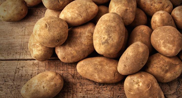 Экспорт картофеля из Украины вырос в 3,5 раза