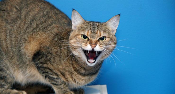Нет регистрации у кошки - плати 30 тысяч: Нардепы предложили новый законопроект