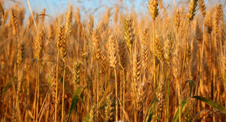 Экспорт зерна из Украины упал впервые за пять лет