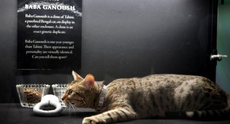 В Китае будут продавать клонированных котят