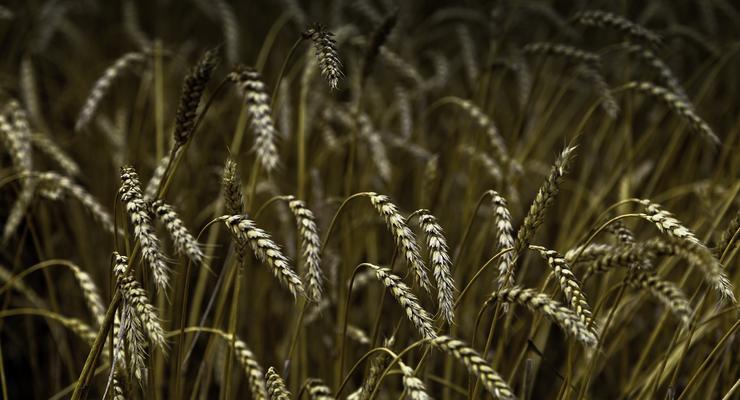 По прогнозу – дождь: Как непогода повлияет на урожай и его цену