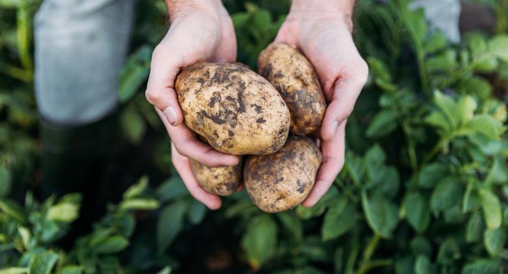 """Дорогой """"второй хлеб"""": Украина бьет рекорды по ценам на картофель"""