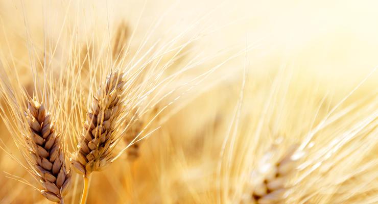 Украина экспортировала рекордный объем зерновых