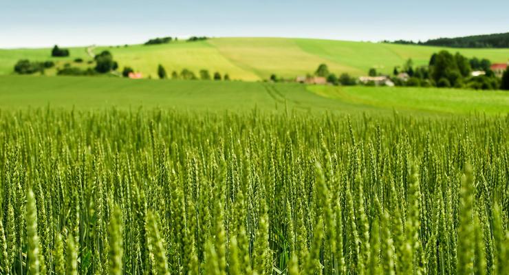 В Украине оценили урожай с незарегистрированных полей