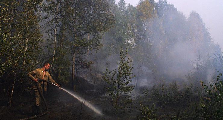 """""""До 150 тыс грн"""": В Украине введут огромные штрафы за сжигание сухостоя"""