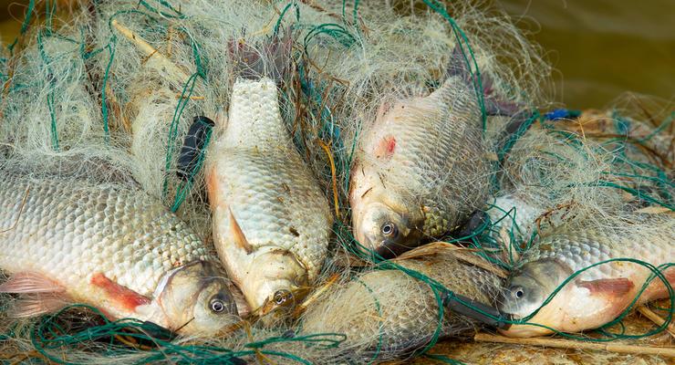 В Украине повысят штрафы для рыболовов-браконьеров в сотни раз