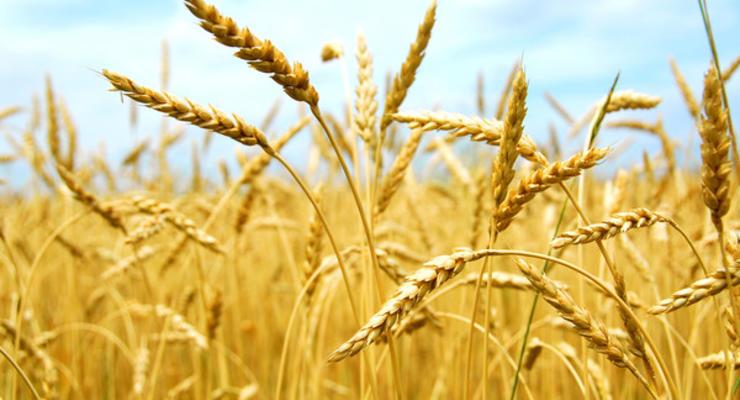 Названы потери украинских аграриев из-за непогоды-2020