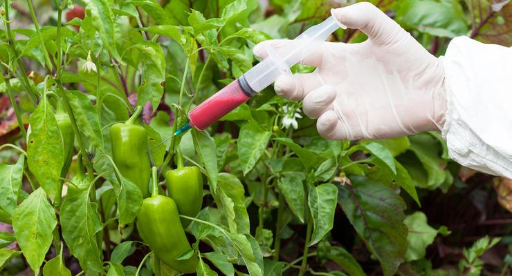 Украинских аграриев будут штрафовать за неправильное обращение с ГМО