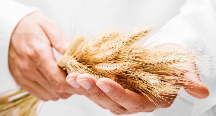 В Украине упали цены на импорт пшеницы
