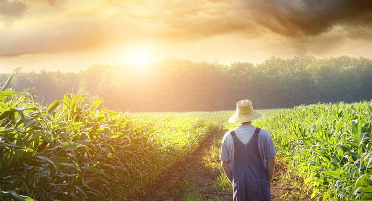 Кабмин увеличил субсидии для новых фермерских хозяйств