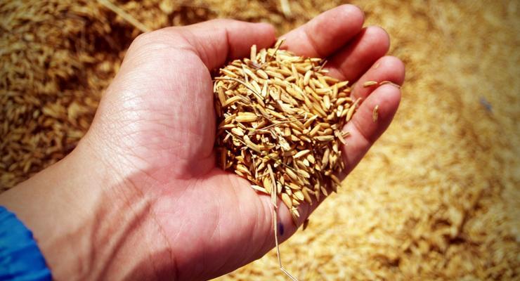 Украина вошла в ТОП-5 крупнейших экспортеров пшеницы