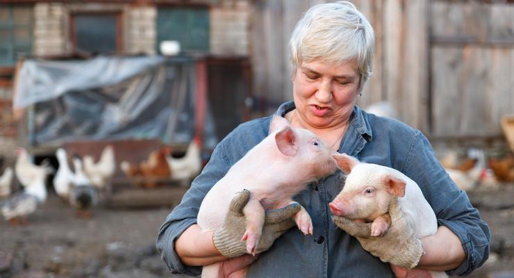Свинина в Украине подорожает к праздникам, - эксперты