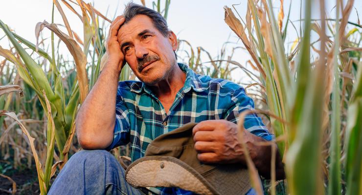 Земельная реформа в Украине: сколько будет стоить гектар
