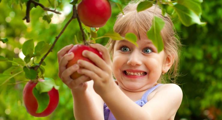 Урожай яблок, винограда, сливы в Украине оказался под угрозой