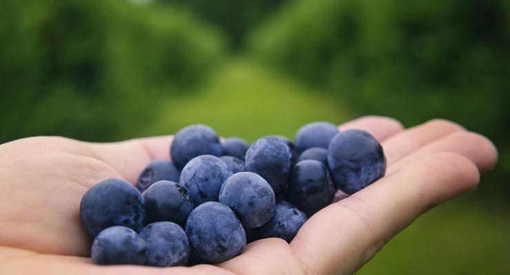 Украинцев штрафуют за незаконный сбор ягод