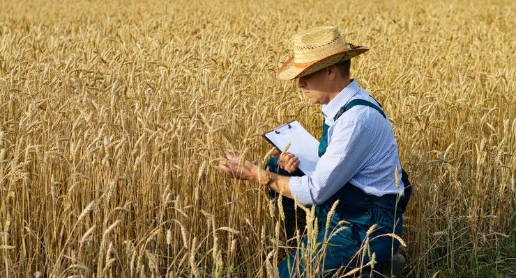 Запасы зерна в Украине критически снизились: угрозы
